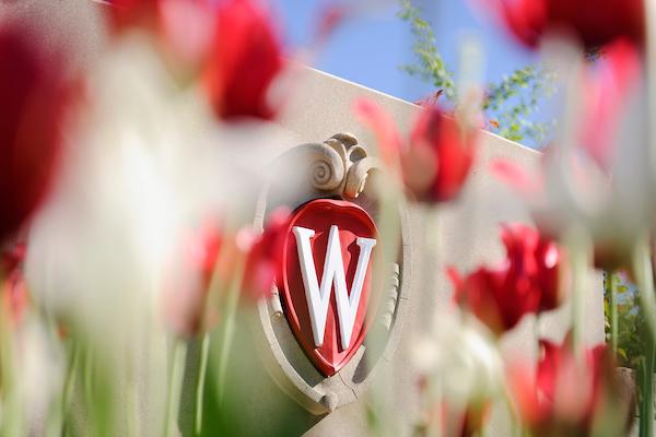 UW-Madison and tulips